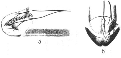 nervnie-okonchaniya-v-klitore